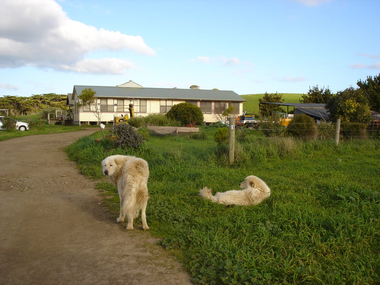Dogs on guard.