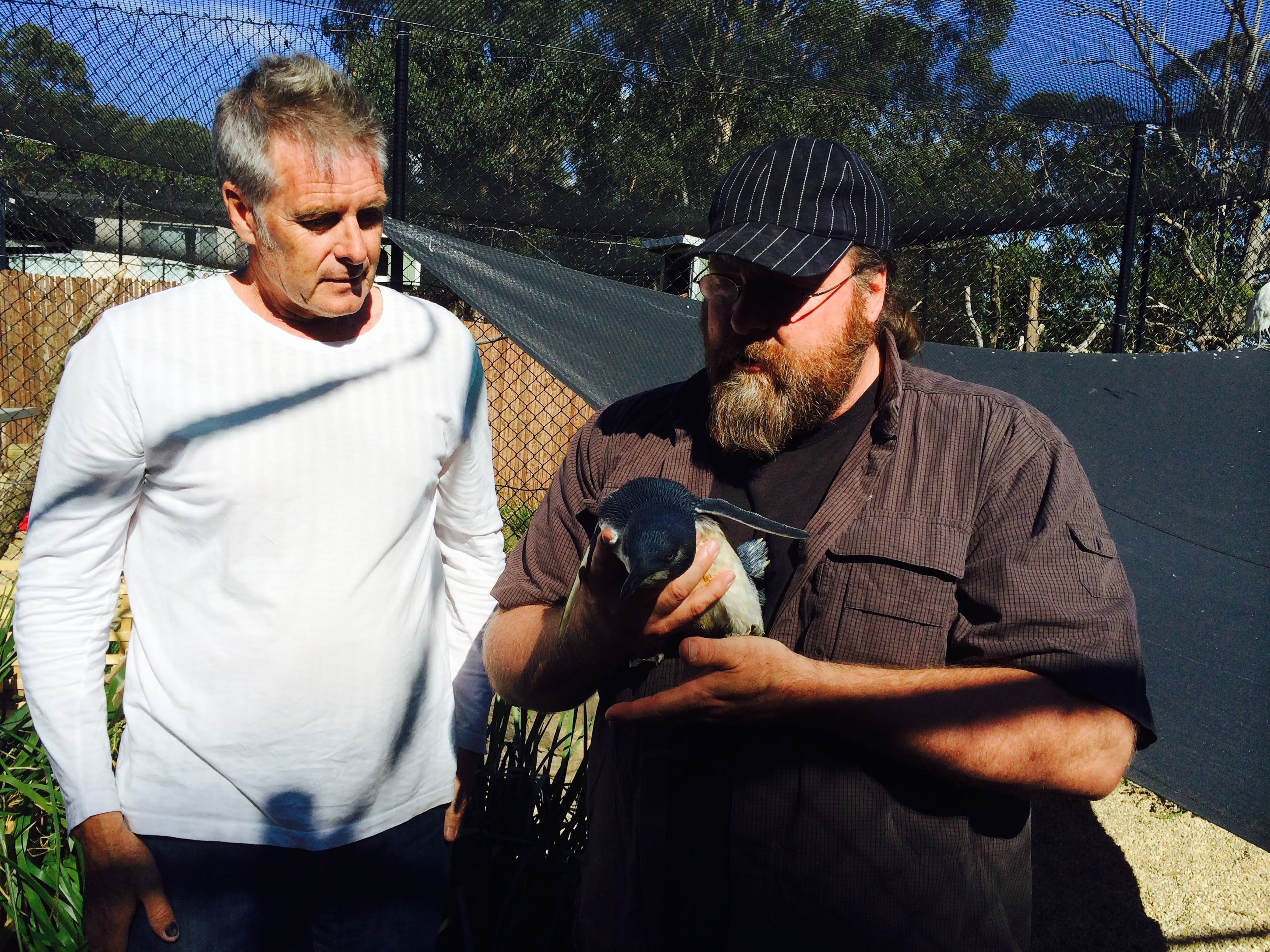Steve and Clay  inspect a Penguin.